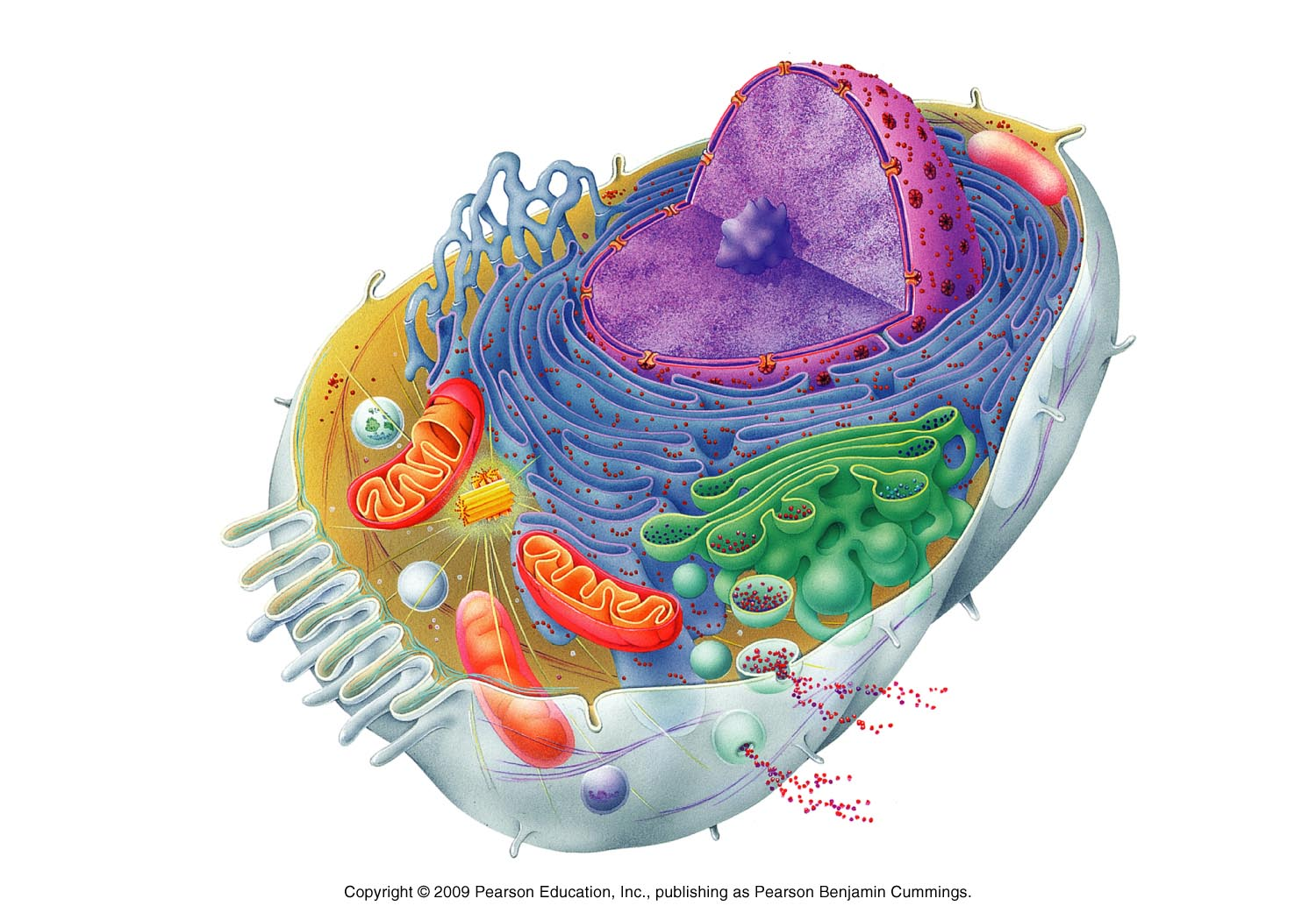 Plant Cell Structure Without Labels